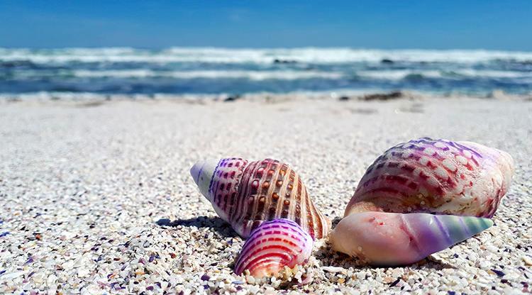Vacanțe la mare